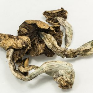psychedelic mushrooms for sale USA